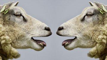8 anecdotes inutiles à savoir sur les animaux