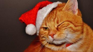 10 blagues sur... Noël